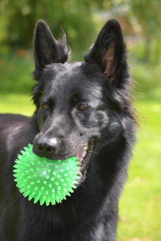 Met haar favoriete groene bal